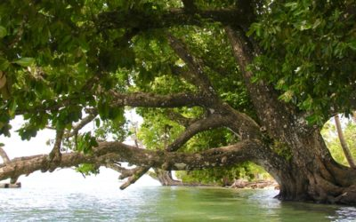 Trees Planted By The Waters